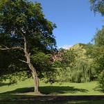 Summer in Winckley Square Preston
