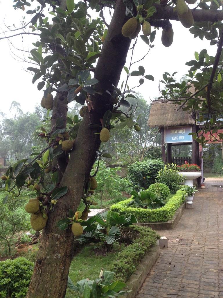 Co Phap Pagoda (16)