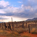 Cattle Pens- Naco Az
