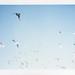 Flock of seagulls by Cynthia E. Wood