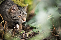 On the Prowl....