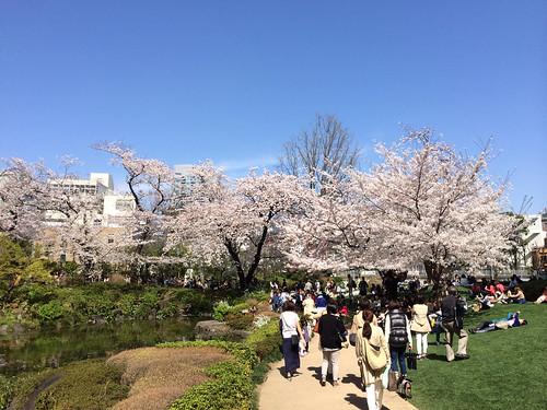 六本木ヒルズ 毛利庭園の桜 2015/3/31
