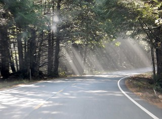 Light in the forest; CA Redwoods
