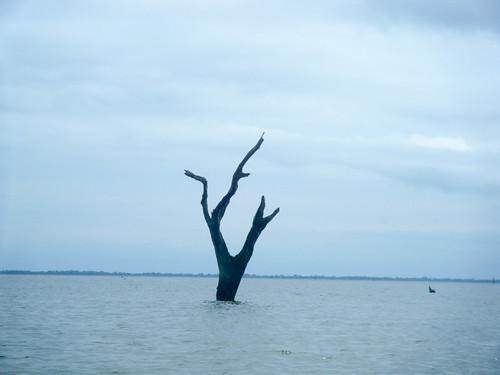 Lake Marion Plantation Islands-27