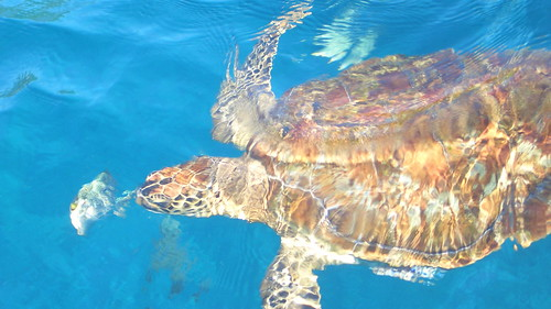 Thailand - Sea Turtle diving - Similan Islands
