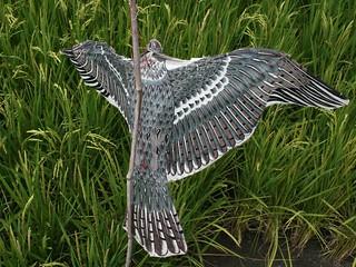 沖天炮、鞭炮、敲鑼打鼓,是聽覺驚嚇法;假老鷹、彩帶彩色旗、稻草人,是視覺驚嚇法。為了驅鳥,農民用盡絕招!攝影:李慧宜