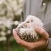 3.27.15 – Hashtag the Hedgehog by emilyfrances5