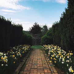 More gardens for you. More gardens for everyone. #latergram #garden #Shenandoah #museum #Shenandoahvalley #va #winchester #oldtown #brick #walkway #statue #regal #hedge #decoration #sculpture #fineart