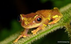 Tamandua Ecolodge & Reserve