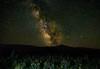 Bear Lake Milky Way