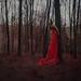 Crimson woods by Mike Alegado
