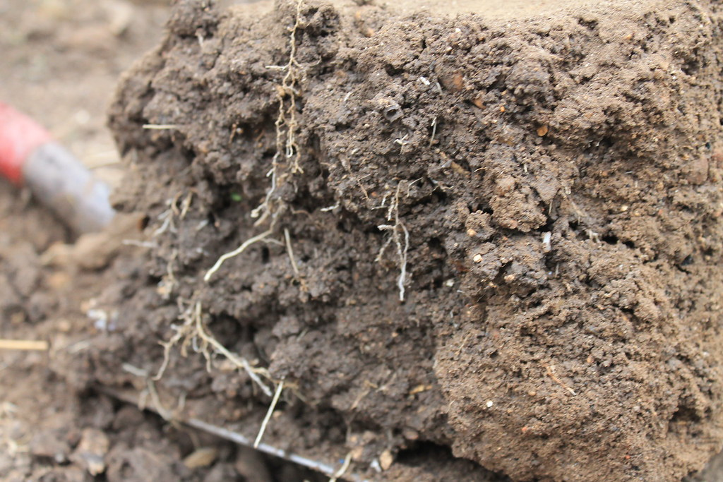 16 March 2015 - Soil Structure