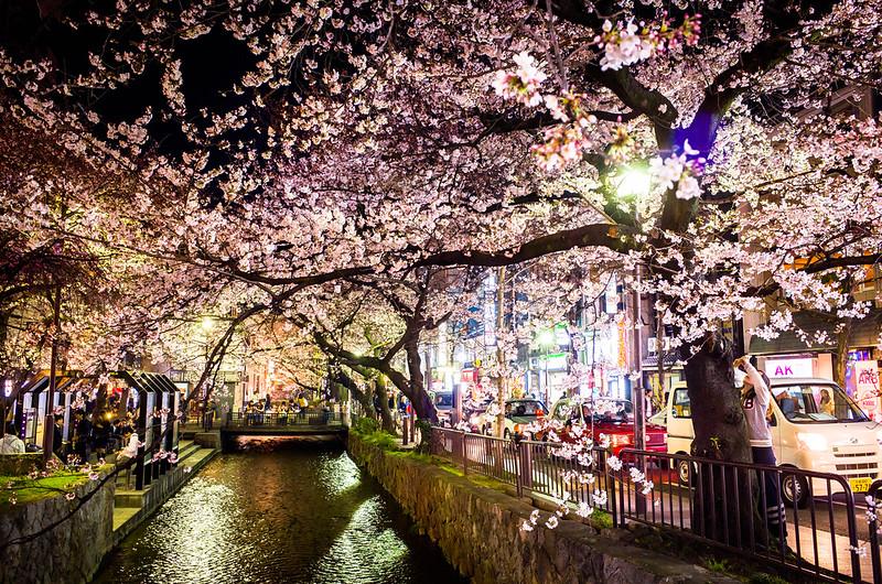 sakura '15 - cherry blossoms #1 (Kiyamachi street, Kyoto)