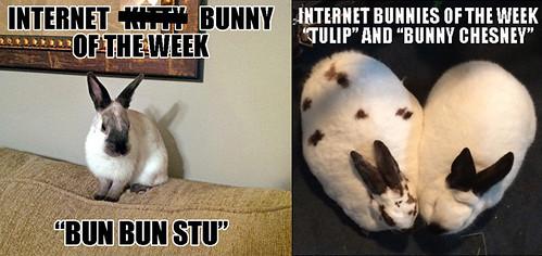 ikotw bunnies 3-26
