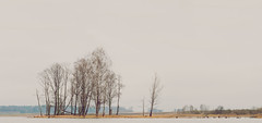 Spring Landscape | Lithuania #88/365