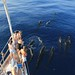 Long-finned pilot whales - Photo by Tethys Research Institute