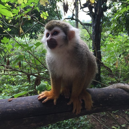 Monkey Land, Dominican Republic