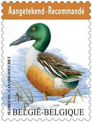 13bis Oiseau Recommandé-slobeend timbre
