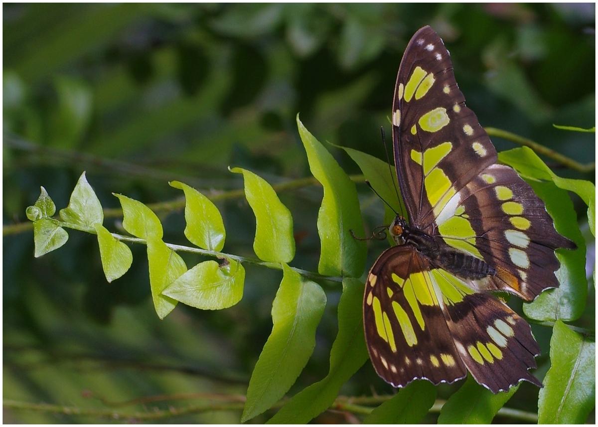 Papillons en Fêtes 2015 17010547581_8c74faf6b8_o