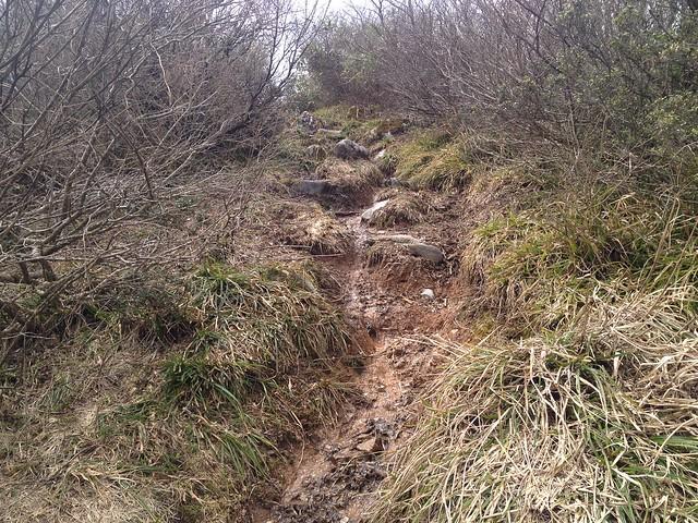 伊吹山北尾根縦走路 P1149取付 雪解け水の登山道
