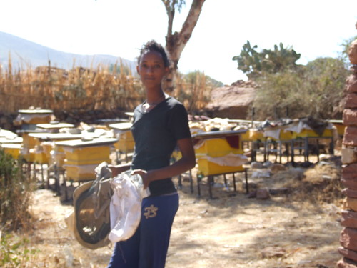 A partial view of Mileat's apiary_Tigray (Photo: ILRI\LIVES)