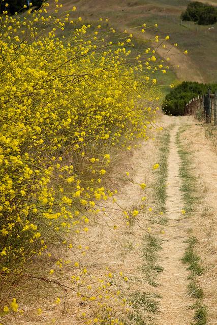 Aureate California Path