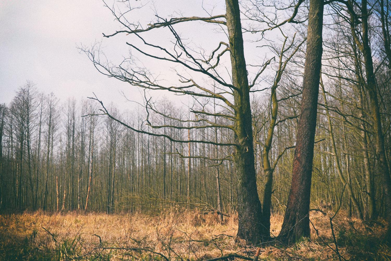 Im Erlenhochwald