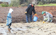Puddles and native grass planting