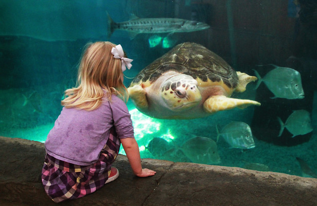 Children's Aquarium: Perfect for the Wee Ones