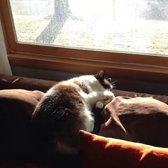 King of sunshine naps