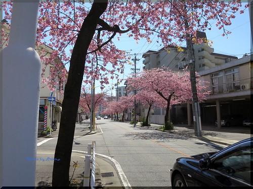 Photo:2015-03-27_ハンバーガーログブック_この時期桜がダブルで楽しめる!【高岳】JACK's KITCHEN_08 By:logtaka