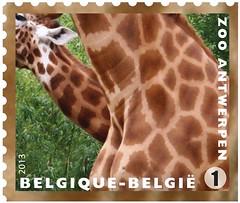 11 Zoo Timbre 10 Girafes