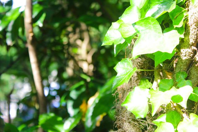 2014-05-24_00014_鍋割山.jpg