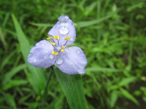 Wet flower.