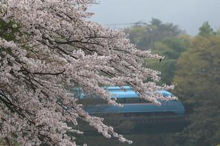 桜とあさぎり号