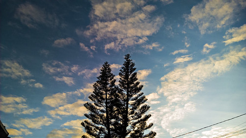 morning brazil sky urban tree brasil clouds sunrise nokia céu cielo microsoft nuvens 930 manhã pinheiro lumia