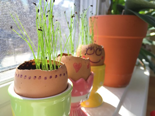 Our chives are growing!