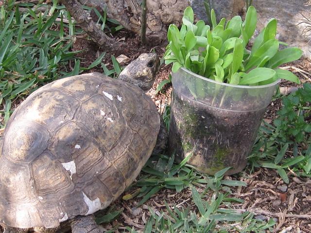 Tortuga & Caléndula