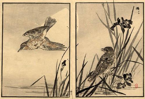 013-El álbum de los cien pajaros -Vol 1- Art-Thomas J. Watson Library