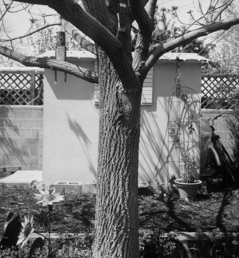 Tree&Shed001a