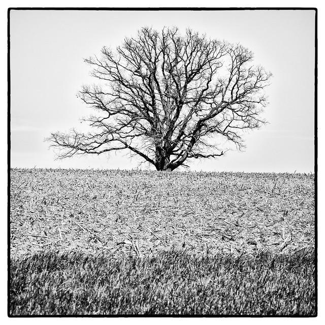 IMG_9062 Tree in Field