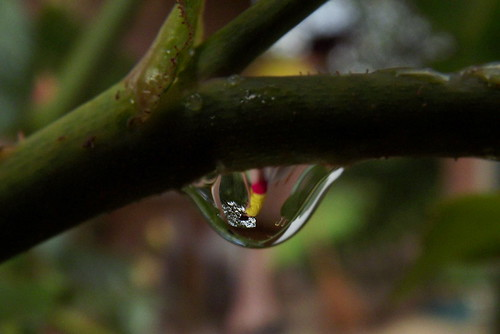 rain drop reflect