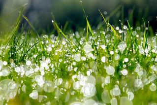 Morning Grass Lights