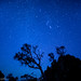 Starry Sky Over the Grand Canyon by dmj.dietrich