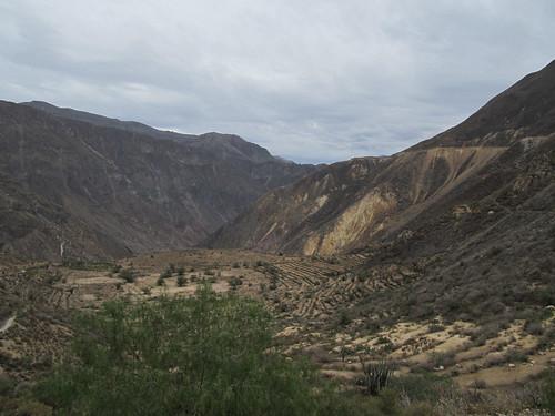 Trek du Cañon de Colca: les terrasses