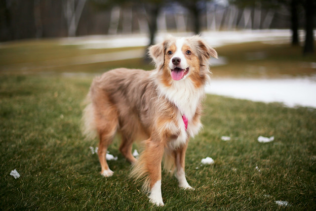 Dog Grooming In Manchester Vt