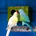 Parrot--Love,,,,,,, by ALOM ART