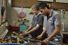 志工正在準備馬來熊的食物。照片由Bornean Sun Bear Conservation Centre (BSBCC) 提供