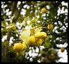 through the viewfinder (citrus)