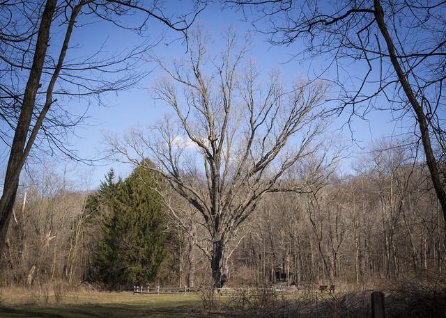 Signal Tree Study #4